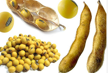 Location and interaction analysis of protein and oil content in Soybean